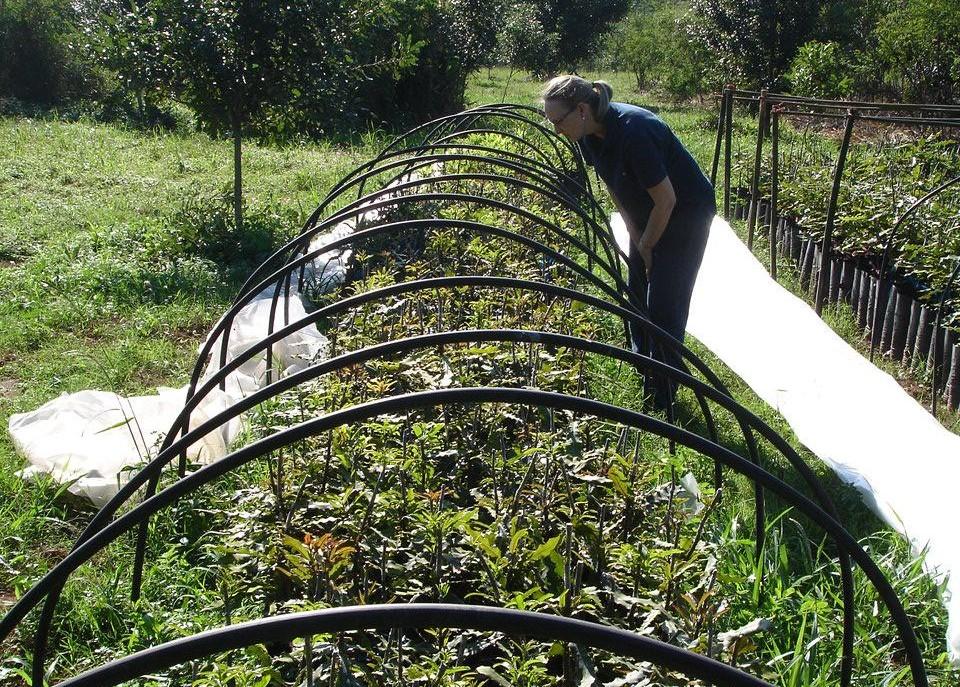 Macadamia en paraguay for Viveros en paraguay